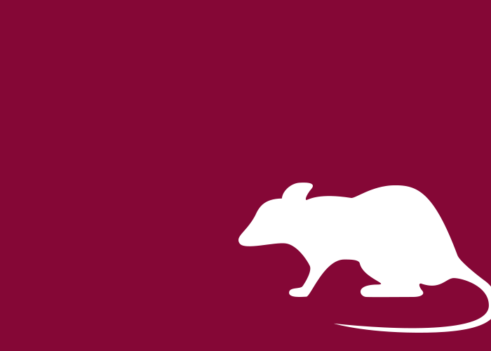 maroon solid white mouse icon