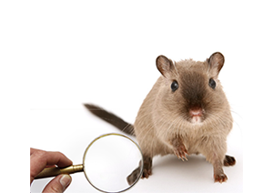mouse under magnifying glass